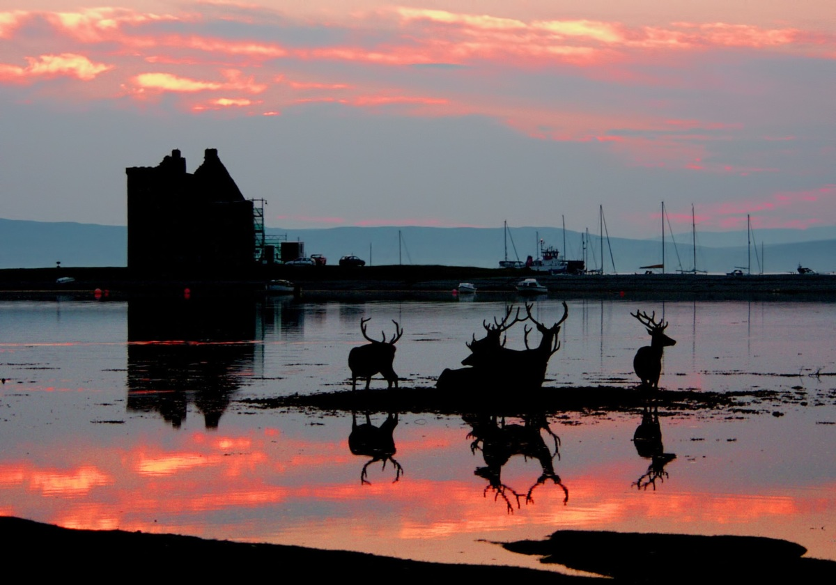 A group of deer silhouetted at sunset against a bay. A building and seem working boats are in the background